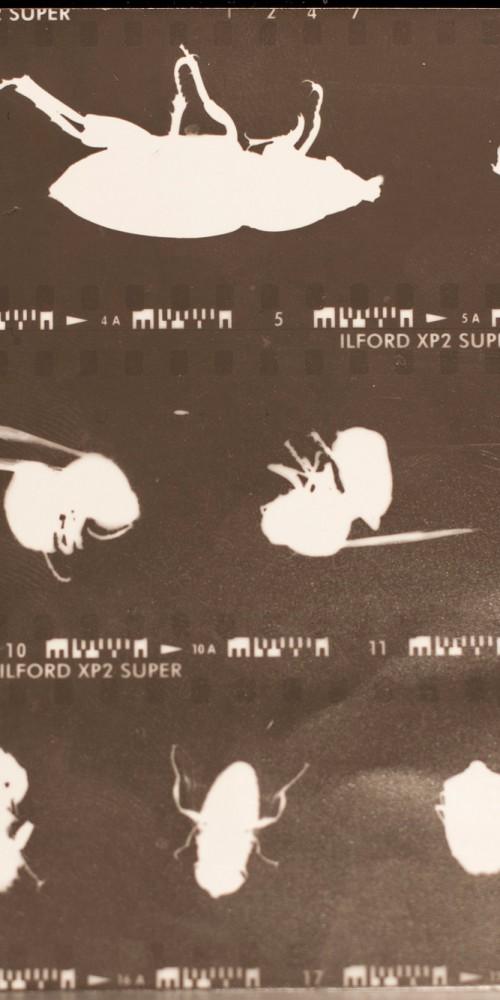 2) foto stampata-1
