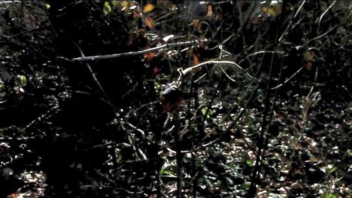 pietrodagostino-video (2)